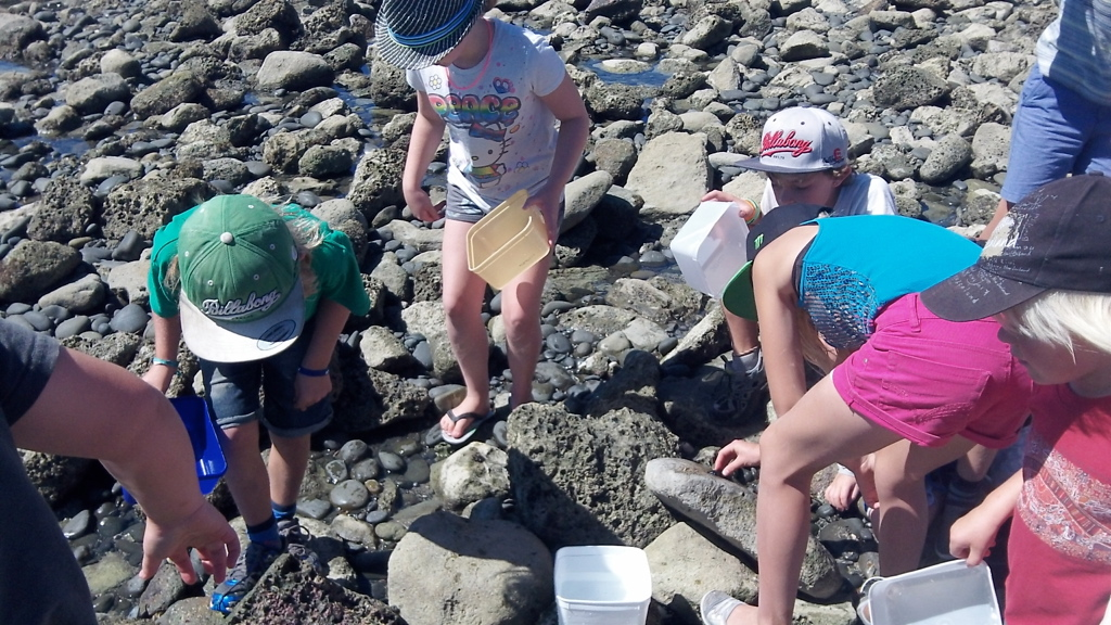 Port Ahuriri Montessori Primary Class explore the enviroment